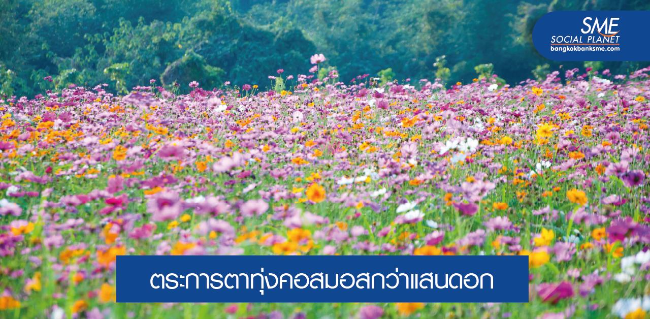 ทุ่งสิริสมัย The Blossom of Gratitude