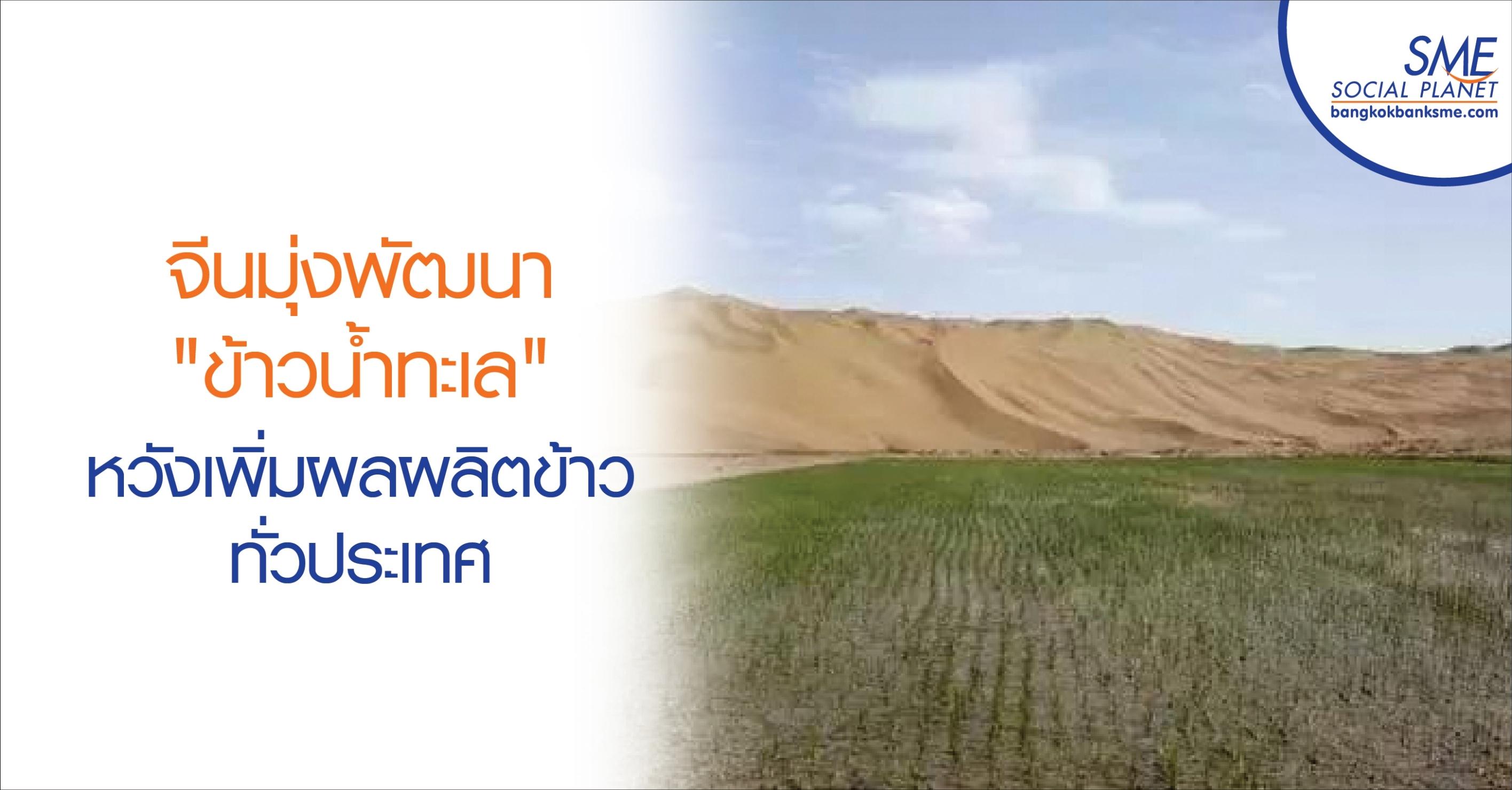 """จีนมุ่งพัฒนา """"ข้าวน้ำทะเล"""" หวังเพิ่มผลผลิตข้าวทั่วประเทศ"""