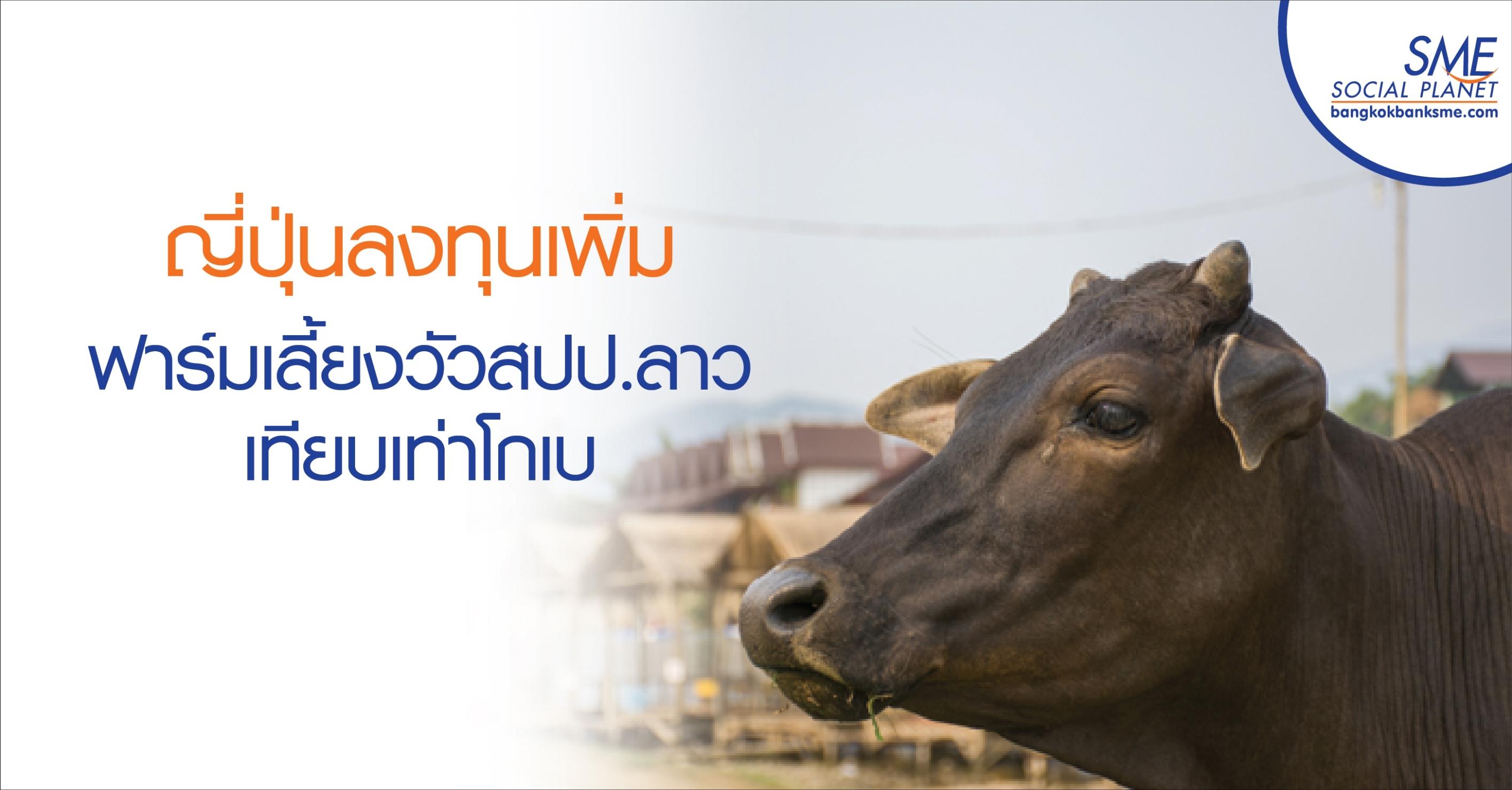 ญี่ปุ่นลงทุนเพิ่มฟาร์มเลี้ยงวัวสปป.ลาว เทียบเท่าโกเบ