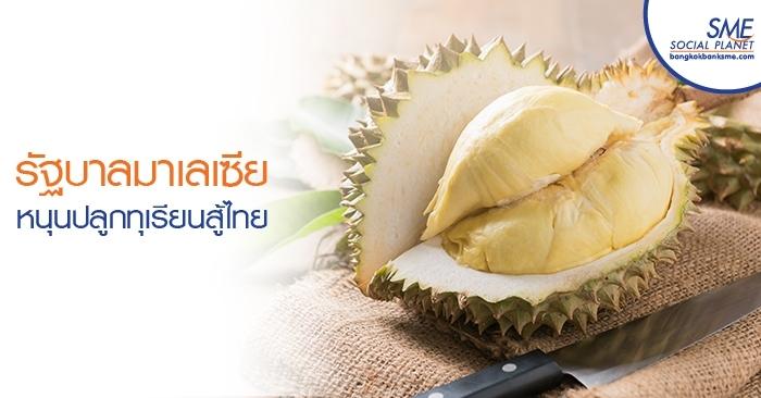 รัฐบาลมาเลเซียหนุนปลูกทุเรียนสู้ไทย