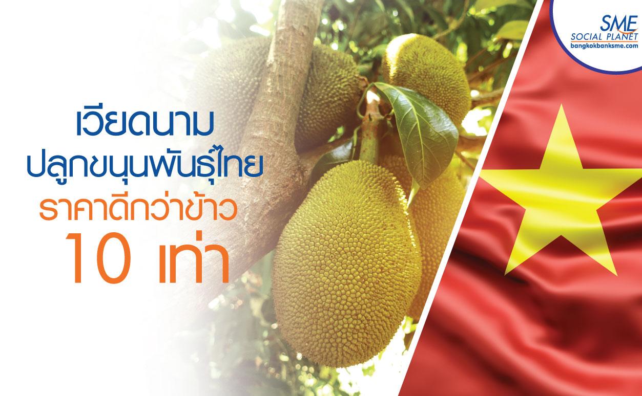 เวียดนาม เปลี่ยนมาปลูกขนุนชี้ราคาดีกว่าขายข้าว